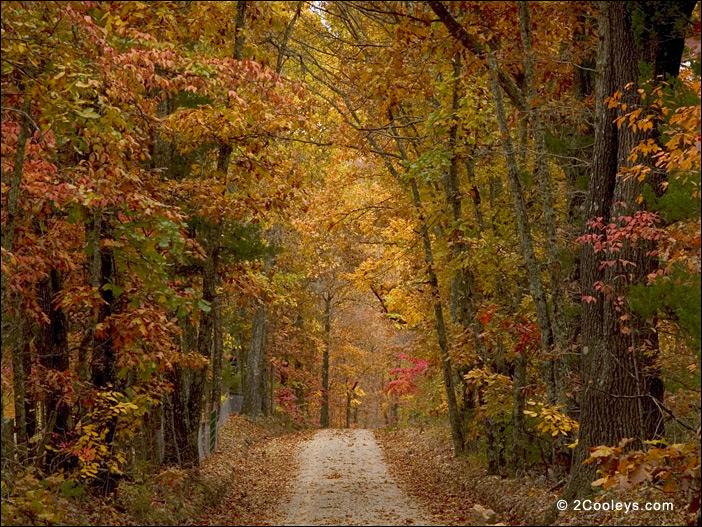 46 Ozarks Fall Foliage Photos 2cooleys Roadside Foliage Pics